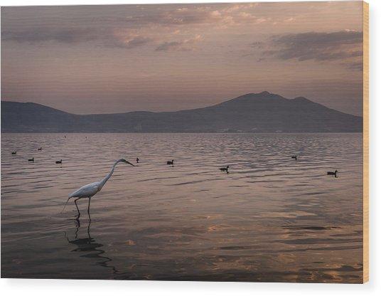 Egret Fishing In Lake At Sunset Wood Print by Dane Strom