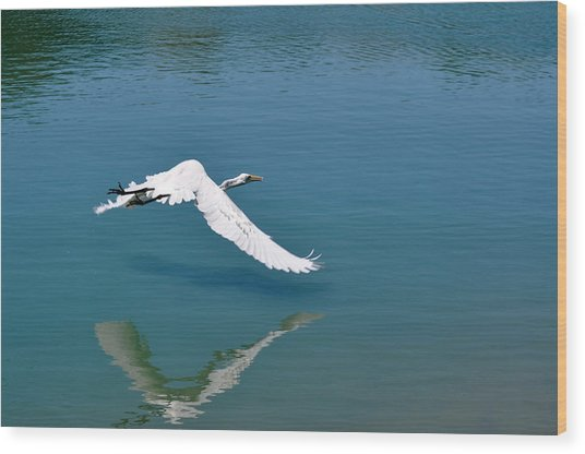 Egret Flying Wood Print by Teresa Blanton