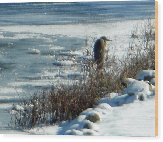 Egret Frozen Lake Wood Print
