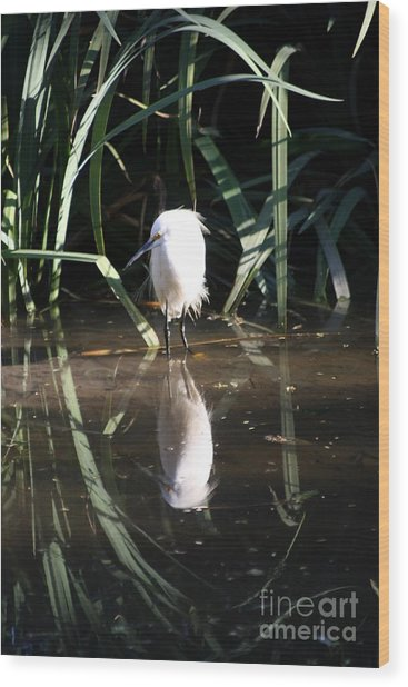 Egret In Reed Wood Print
