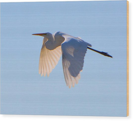Egret In Silhouette Wood Print