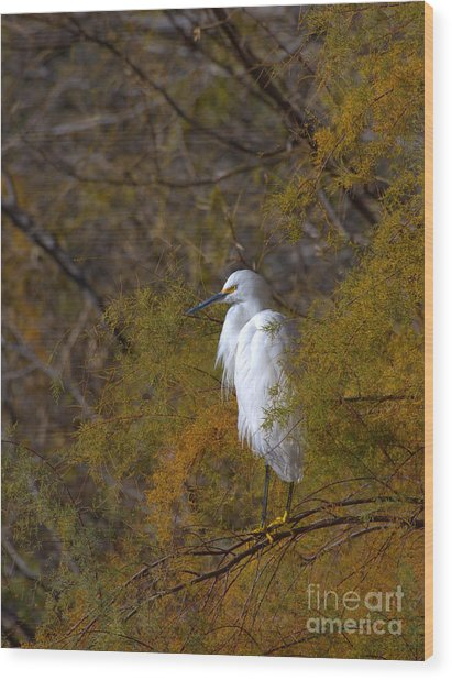 Egret Surrounded By Golden Leaves Wood Print