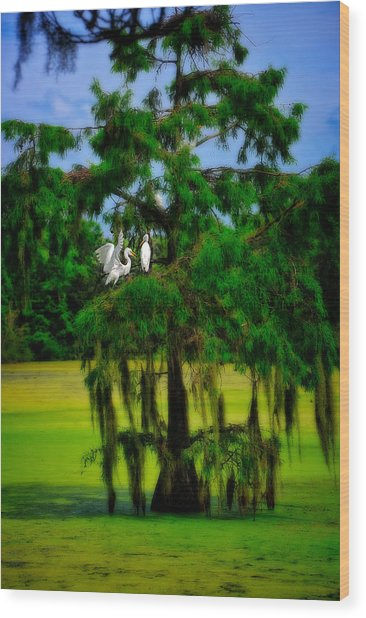 Wood Print featuring the photograph Egret Tree by Harry Spitz