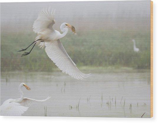 Egrets Fish Wood Print