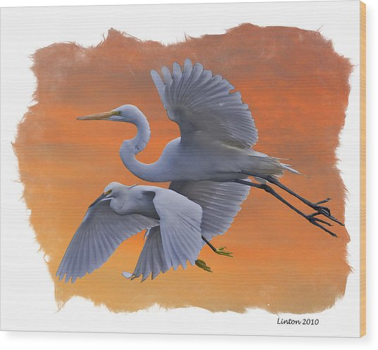 Egrets Great And Snowy Wood Print