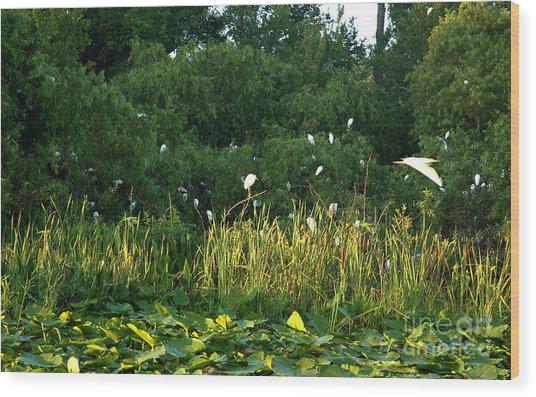Egrets Nesting Wood Print