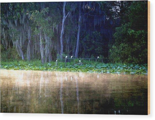 Egrets On A Fence Wood Print