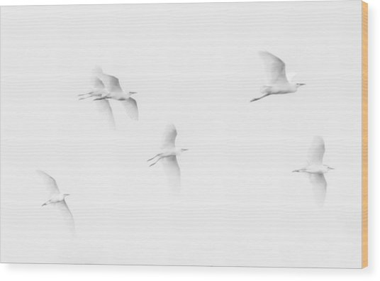 Egrets White On White B/w Wood Print
