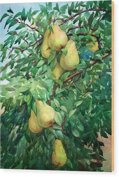 Eight Pears Wood Print by Peter Sit
