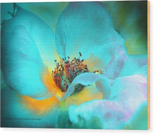El Color De La Vida Wood Print