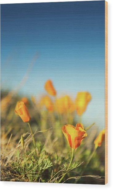 El Paso Poppies Wood Print