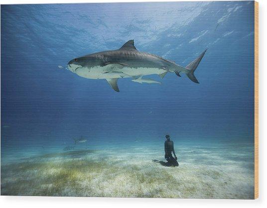 El Tigre Wood Print by One ocean One breath