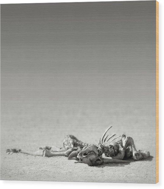 Eland Skeleton In Desert Wood Print
