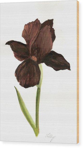 elderly Iris Wood Print by Susan Tilley