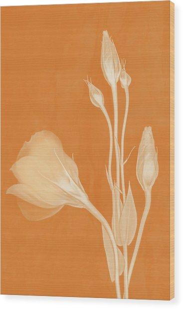 Elegance In Apricot Wood Print