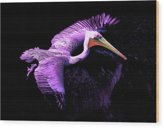 Elegant Flight In Violet Wood Print