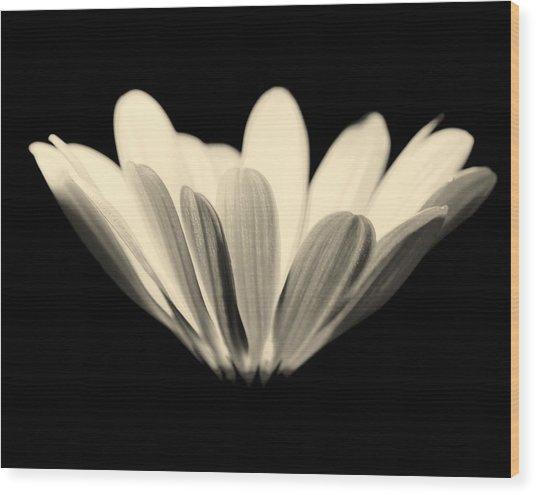 Elegant Wood Print by Julie Lueders