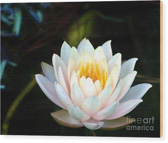Elegant White Water Lily Wood Print