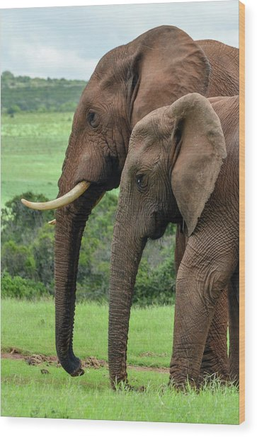 Elephant Couple Profile Wood Print