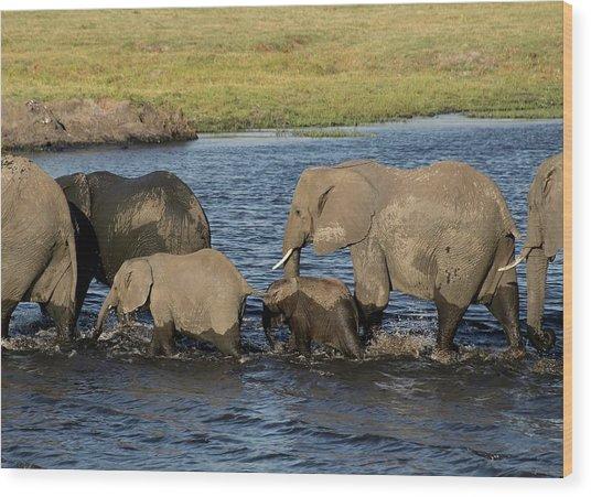Elephant Crossing Wood Print
