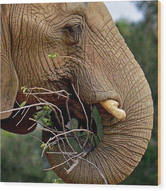 Elephant Curl Wood Print