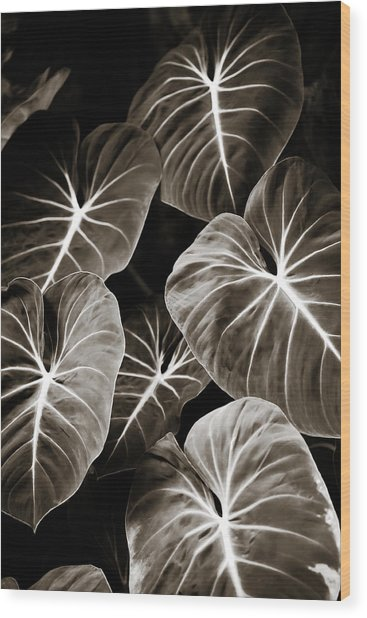 Elephant Ears On Parade Wood Print