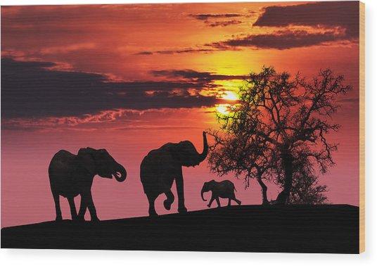 Elephant Family At Sunset Wood Print