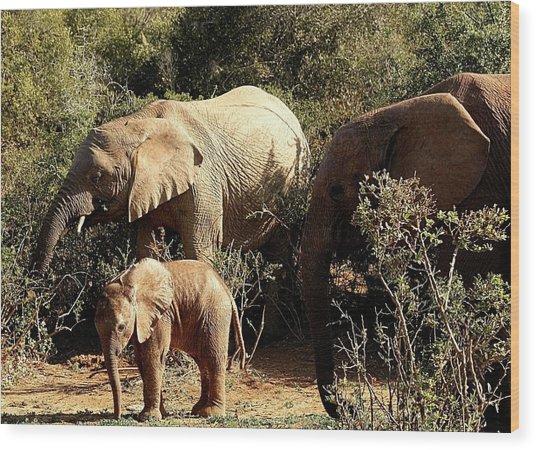 Elephant Family Wood Print