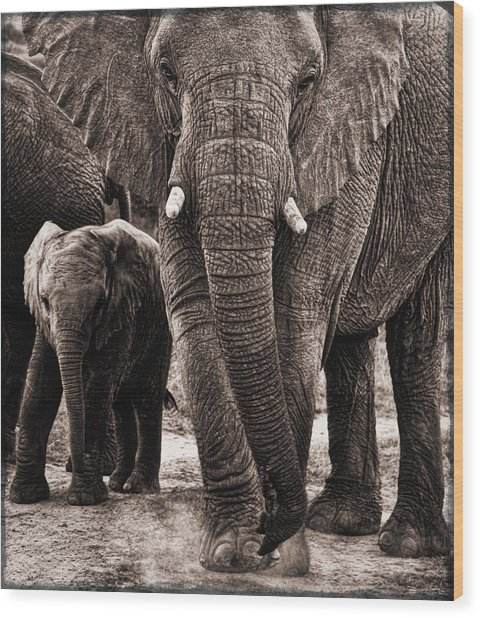 Elephant Family Time Wood Print