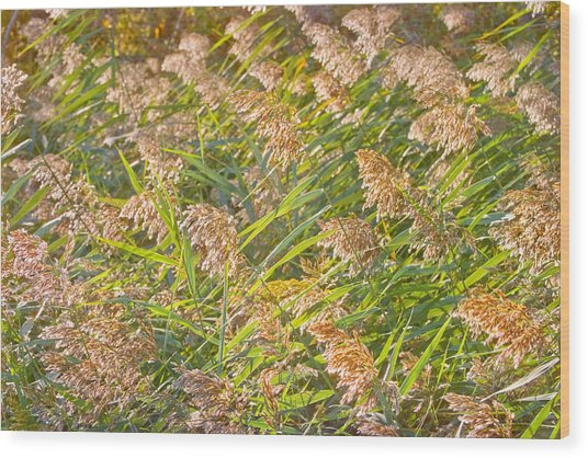 Elephant Grass Photo Wood Print by Peter J Sucy