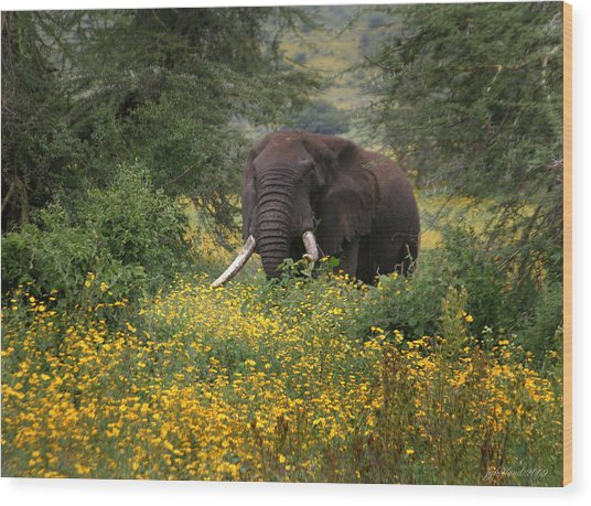 Elephant Of The Crater Wood Print
