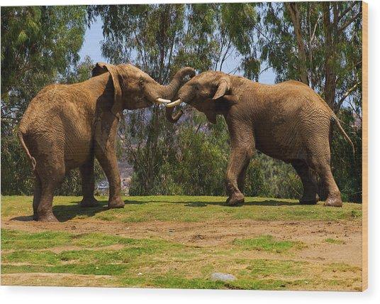 Elephant Play 3 Wood Print
