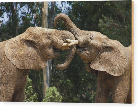Elephant Play Wood Print