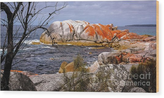 Elephant Rock - Bay Of Fires Wood Print