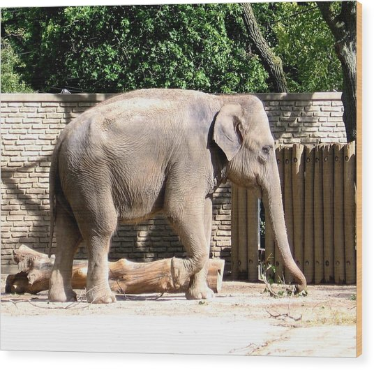 Wood Print featuring the photograph Elephant by Rose Santuci-Sofranko