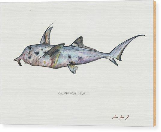 Elephant Shark Wood Print