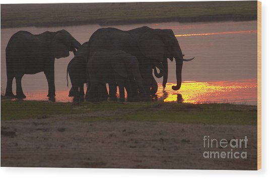 Elephant Sunset Wood Print