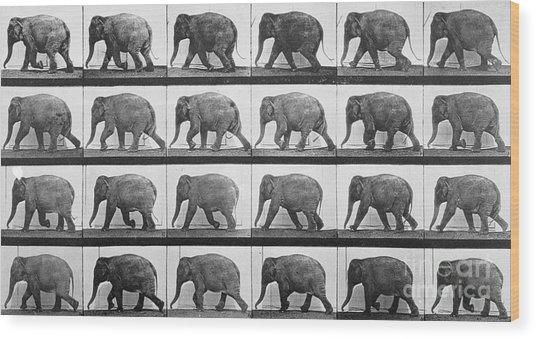 Elephant Walking Wood Print