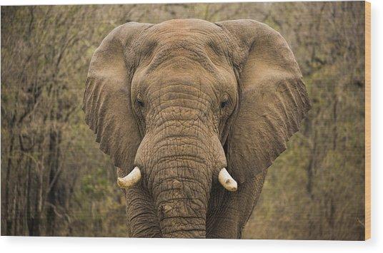 Elephant Watching Wood Print