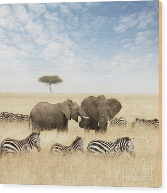 Elephants And Zebras In The Grasslands Of The Masai Mara Wood Print
