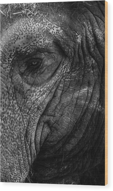 Elephants Eye Wood Print
