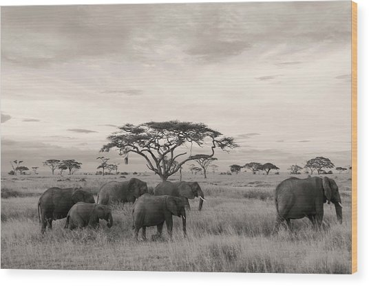 Wood Print featuring the photograph Elephants by Stefano Buonamici