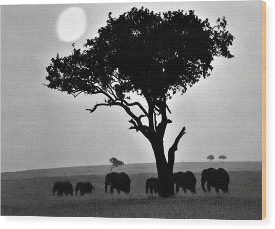 Elephants Under A Tree Wood Print