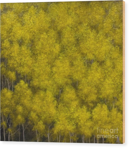 Elevation Wood Print