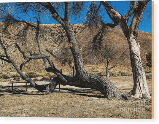 Elizabeth Lake Tree Wood Print