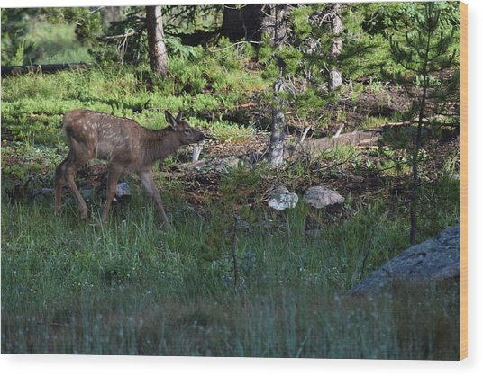 Baby Elk Rmnp Co Wood Print