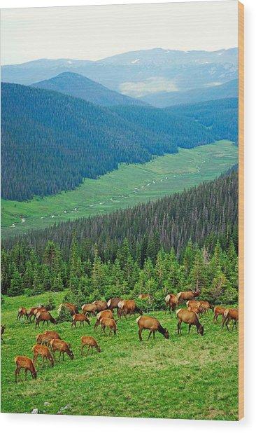 Elk Highlands Wood Print