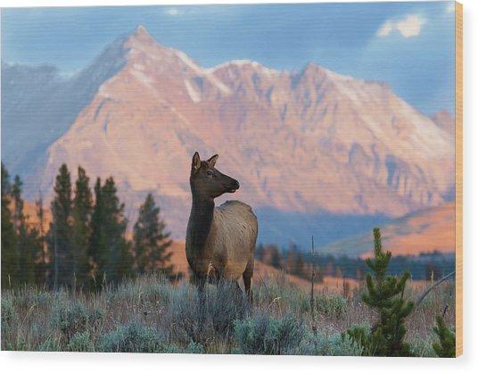 Elk Majesty Wood Print