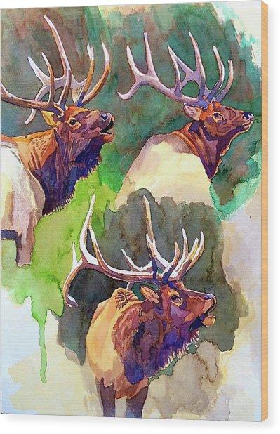Elk Studies Wood Print