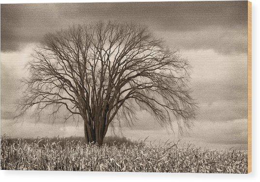 Elm Fortress Wood Print